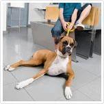 Pet Consultations Service