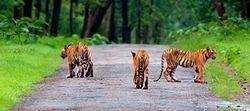Tadoba Andhari Tiger Reserve Photography Tour