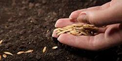Agri Gold Seeds