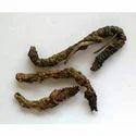 Katuki / Picorrhiza Kurroa