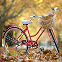 Kids, Racing Bicycles and Rickshaws