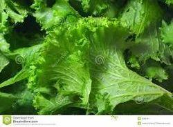 Fresh Mustard Greens