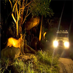 Night Safari Tour