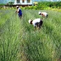 Cultivation Service