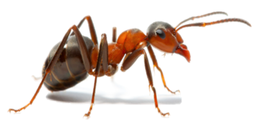 Termite Treatment (White Ants)