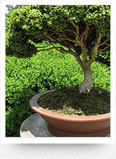 Ornamental Planting Services
