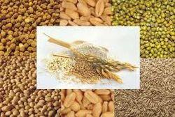 Organic Wheat 40 Rs Per Kg