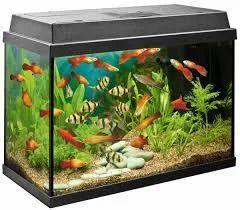 Fish Aquarium Accessories Manish