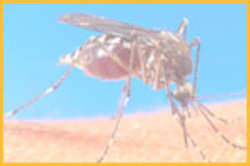 Mosquitoes Management Services