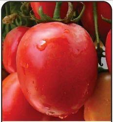 Durgesh Amar Tomato