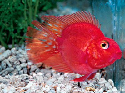 Parrot Fish Modern Pet Centre Wholesaler In Jessor Road Kolkata