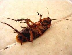 Cockroach Control Gel Service