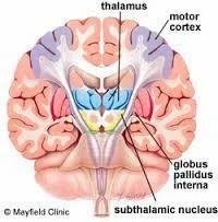 Subthalamus Medical Care Services