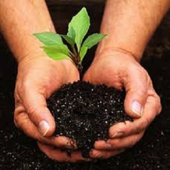 Home gardening service in madurai vadipatti by abi exports id home gardening service solutioingenieria Images