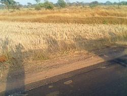 32000sqft Land 150/-sqft on road Raipur best investment .