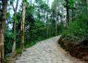 Vazhachal Forest Gardens & Waterfall