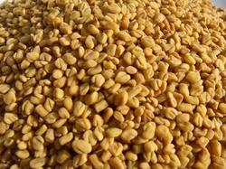 Fenugreek Seeds Medium Size