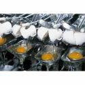 Eggzyme CA - Fungal Catalase