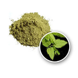Henna Leaves And Powder Henna Ke Patte Megha Products Balotra