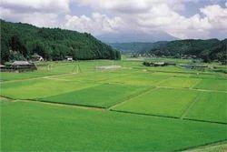 Agriculture Land In Nashik