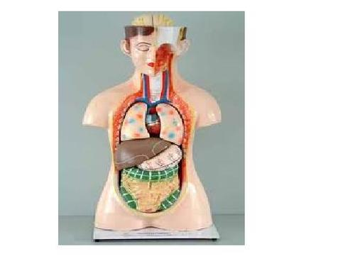 Biology Laboratory Model - View Specifications & Details of ...