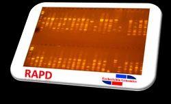 Bacterial RAPD