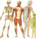Human Biology Physiotherapy Consultants