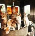 Stray Animal Care Center