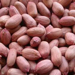 Bold Type Groundnuts