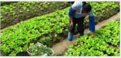 Hotriculture Services