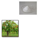Potassium Polyacrylate For Fruit Trees