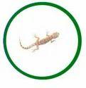Lizard Control Treatment Services