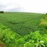 Land Dealing Services