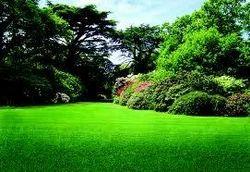 Fresh Green Garden Grass