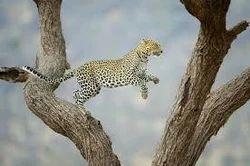 Wildlife Photography Service