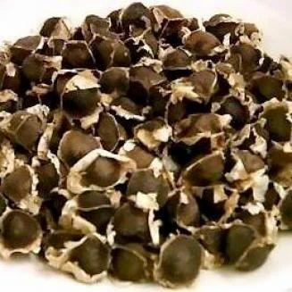 Moringa Seeds & Herbal Seeds - Moringa Seeds PKM-1 Variety