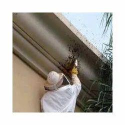Honey Bee Control Service