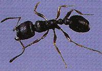 Pavement Ants-