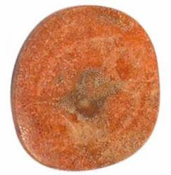 Sponge Coral Stone