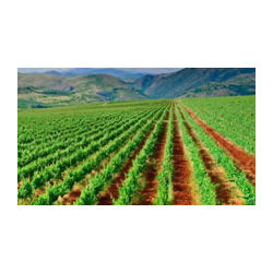 Agricultural Development Services