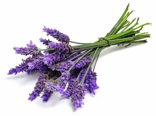 lavender-flowers-500x500.jpg