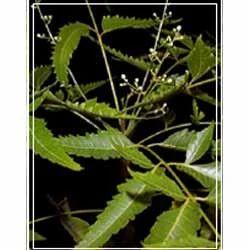 Neem Leaf/ Bark Extract