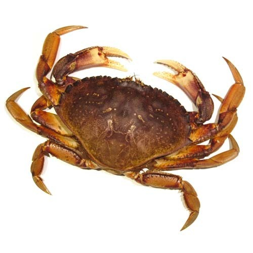 Live Crab in Bengaluru - Latest Price & Mandi Rates from Dealers in