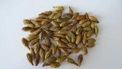 Haritaki Seeds
