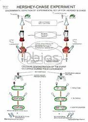 Biochemistry Science Chart
