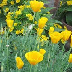 Seasonal flowers view specifications details of seasonal flower seasonal flowers mightylinksfo