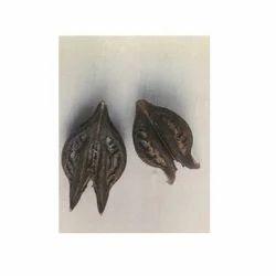 Martynia Annua Seed