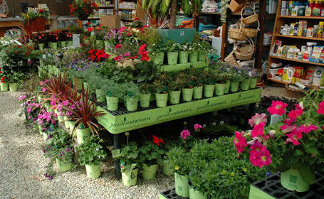 Plants And Nursery Services Service Provider From New Delhi