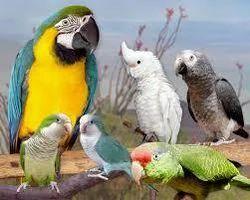Exotic Birds Treatment Services