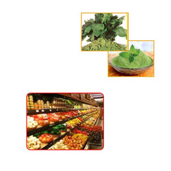 Vegetable Powders for Food Industries